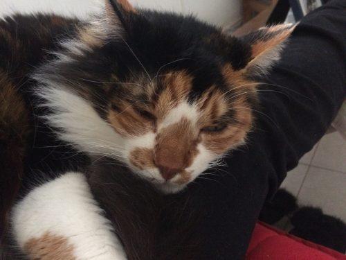 כל החתולים נולדו שווים ואז אלוהים ברא את החתול שלי (חולצה בעיצוב אישי) photo review