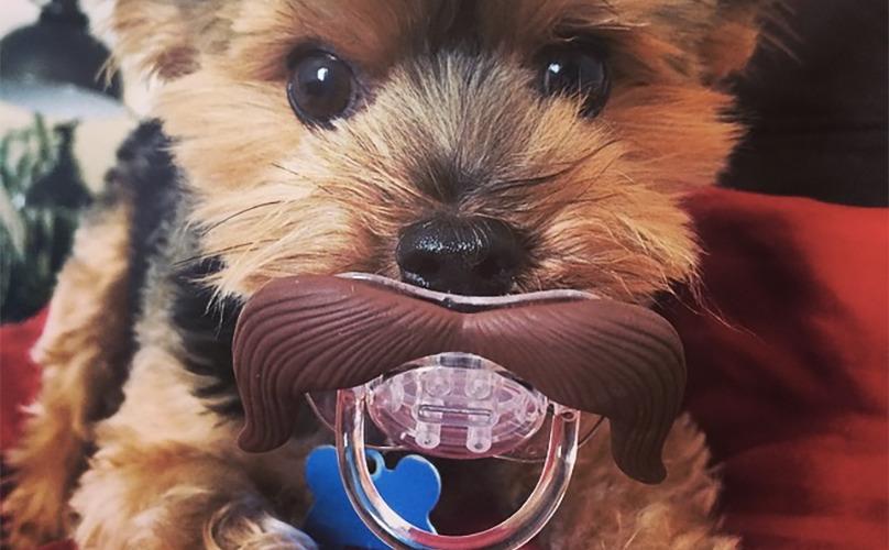 מעולה כלבים לאימוץ Archives | ישראדוג IQ-13