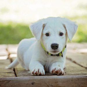 קולקציית גזעי כלבים
