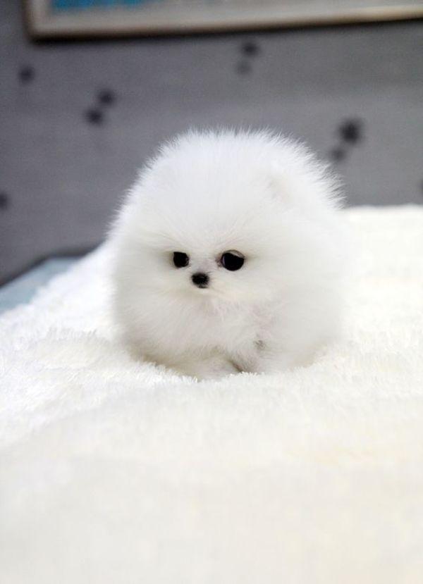 תוצאת תמונה עבור כלבלבים חמודים וקטנים