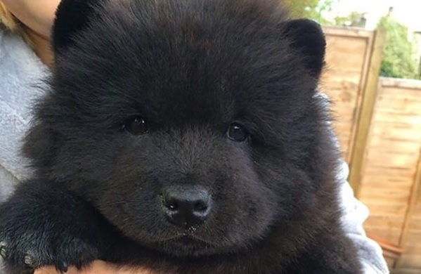 סופר 20 גורי הכלבים הכי חמודים בעולם | ישראדוג TR-07
