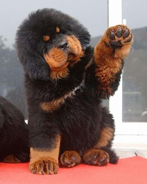מגניב 20 גורי הכלבים הכי חמודים בעולם | ישראדוג FB-86