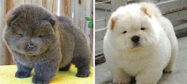 מצטיין 20 גורי הכלבים הכי חמודים בעולם | ישראדוג MA-25