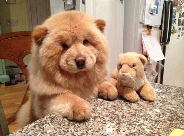 ענק 20 גורי הכלבים הכי חמודים בעולם | ישראדוג QT-24