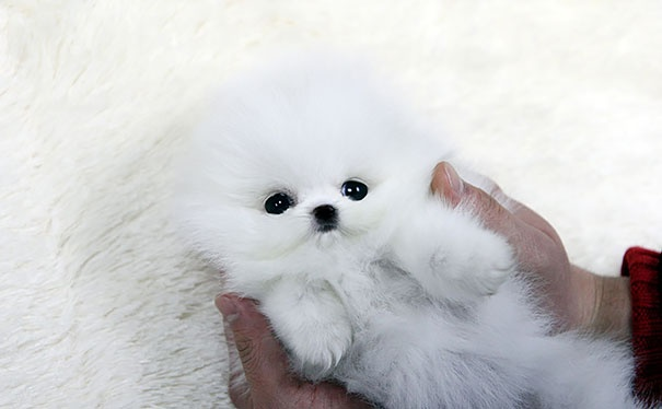 מודרני 20 גורי הכלבים הכי חמודים בעולם | ישראדוג IU-44